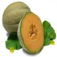 musk-melon
