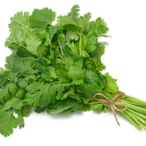 uses-of-coriander-leaves-in-tamil